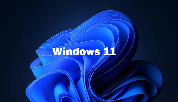 windows11wallpaper
